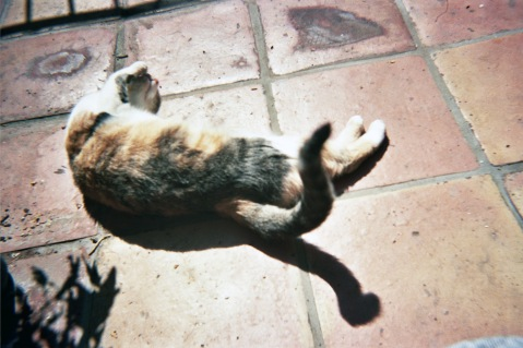 allegra hyde cat